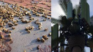 Turnurile 5G omoara albinele