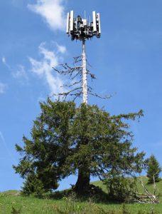 Copac usact de antena